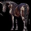 Riding unicorn Arabian Horse Flaxen Chestnut