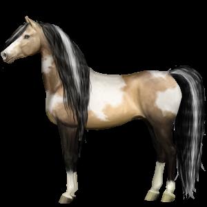 Riding Horse Vanner Palomino Tobiano