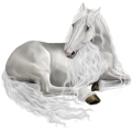 Riding Horse Dapple Gray