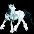 Riding Horse Brumby Bay