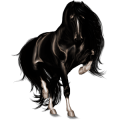 Cavalo de passeio Appaloosa Manto alazão