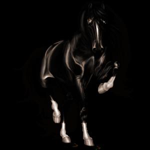 Верховая лошадь Арабская Чистокровная Серый форелевый