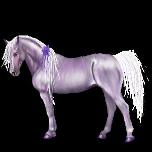 Pony Highland Pony Dapple Gray