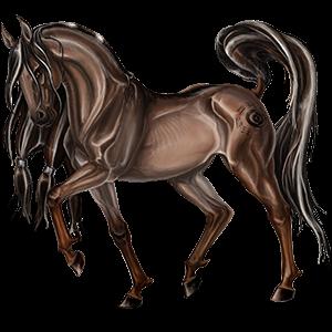 Riding Horse Nokota Dark Bay