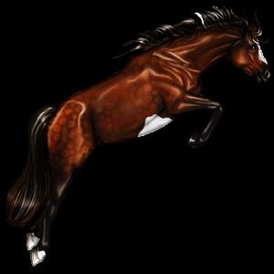 Pony Belgian Riding Pony Flaxen Chestnut