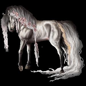 حصان ركوب حصان نابسترابر أسود أشهب مرقط