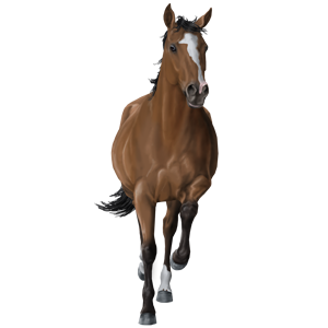 Riding Horse Quarter Horse Chestnut