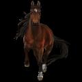 סוס רכיבה קנאבסטרופר ביי מנומר