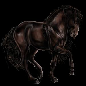 Riding pegasus Nokota Black