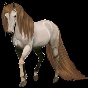 Riding Horse Akhal-Teke Light Grey