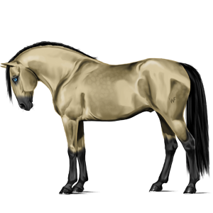 Riding Horse Holsteiner Dark Bay