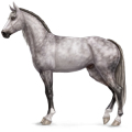 Riding Horse Akhal-Teke Dapple Grey