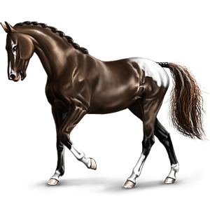 Jazdecký kôň Americký Paint Horse hnedák Overo