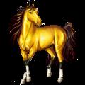 حصان ركوب حصان عربي  رمادي خفيف
