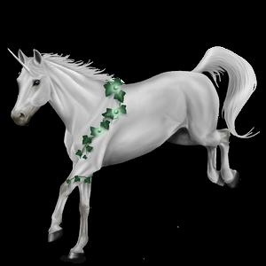 Riding unicorn Marwari Cherry bay