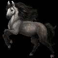 Koń wierzchowy Pinto Ciemnokasztanowata Overo
