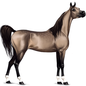 Cheval de selle Arabe Gris Clair