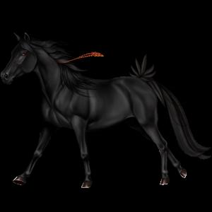 Reitpferd Araber Hellgrau