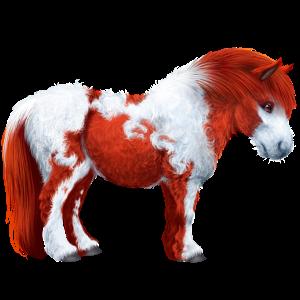 Pony Shetland Roan