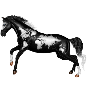 Riding Horse Mustang Dapple Gray