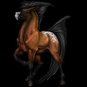 Poney Quarter Pony Bai Cerise