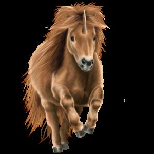 Einhorn-Pony Shetlandpony Dunkelbrauner