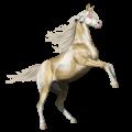 Cheval de selle Paint Horse Pie Tobiano Gris Pommelé
