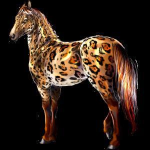 Koń wierzchowy Koń luzytański Izabelowata