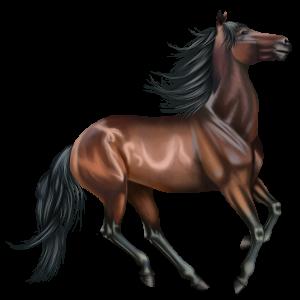 Riding Horse Thoroughbred Liver chestnut