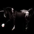 Unicorn Appaloosa Bay Snowflake