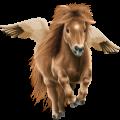 Pegasus pony Chincoteague Pony Black Overo