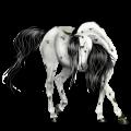 Riding Horse Knabstrupper Black Blanket