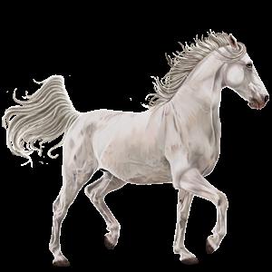 Jezdecký pegas Irský hunter Smíšený bělouš