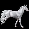 Cheval de selle Quarter Horse Gris Pommelé