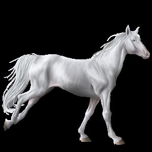 Riding Horse Mustang Cremello