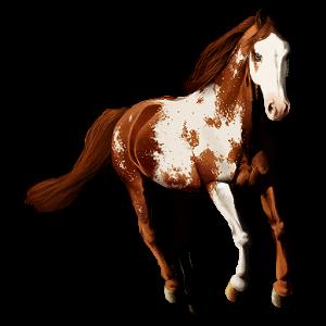 Riding pegasus Mustang Roan