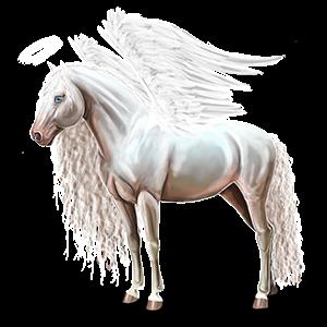 Pegas Andalúzsky kôň tmavý hnedák
