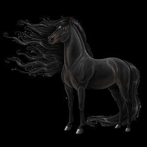 Jezdecký kůň Irský hunter Světlý ryzák