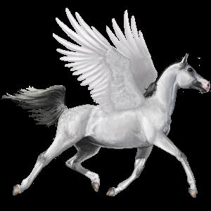 Riding pegasus Paint Horse Dapple grey Tobiano