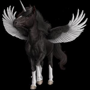 Poney licorne ailé Connemara Noir