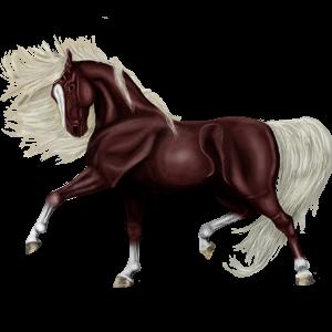 Poník Velšský kůň Hnědák