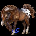 Riding Horse Vanner Dun