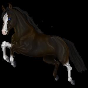 Pony Belgian Riding Pony Dark Bay