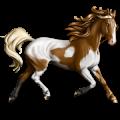 Ratsuhevonen Paint-hevonen Hallakko, tobiano