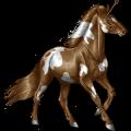 Pony-eenhoorn Highland Pony Wildkleur
