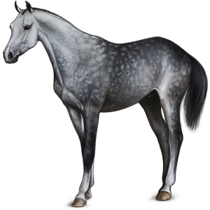 Riding Horse Thoroughbred Dapple Gray