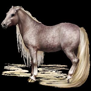 Pegasový poník Fjord Ulsblakk