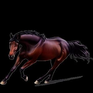 Pegaso da corsa Mustang Manto Castano Maculato