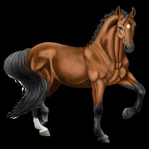 Pegasus Lusitano Dunkelbrauner