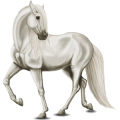 Riding Horse Lipizzan Light Gray